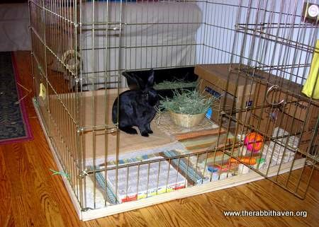 Pen living for rabbits for Homemade bunny houses