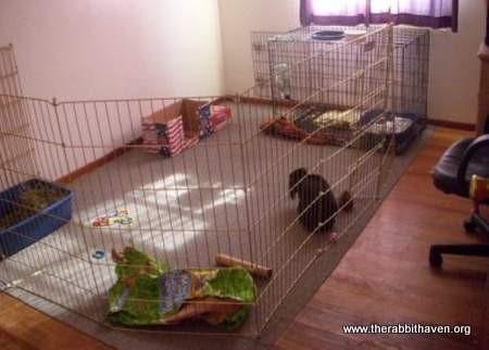 Pen Living For Rabbits